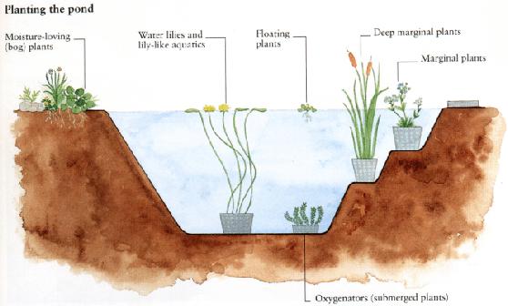Plants for Deep pond plants